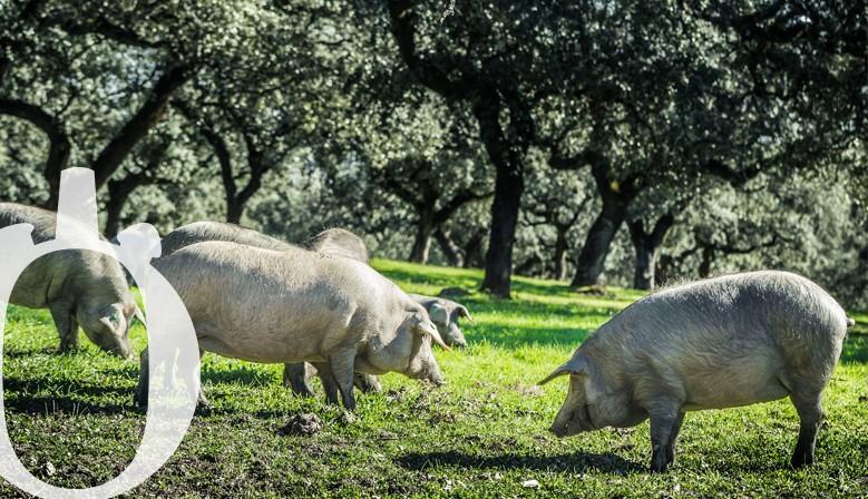 Embutidos y Chacinas elaboradas con Cerdo Ibérico de exquisita calidad